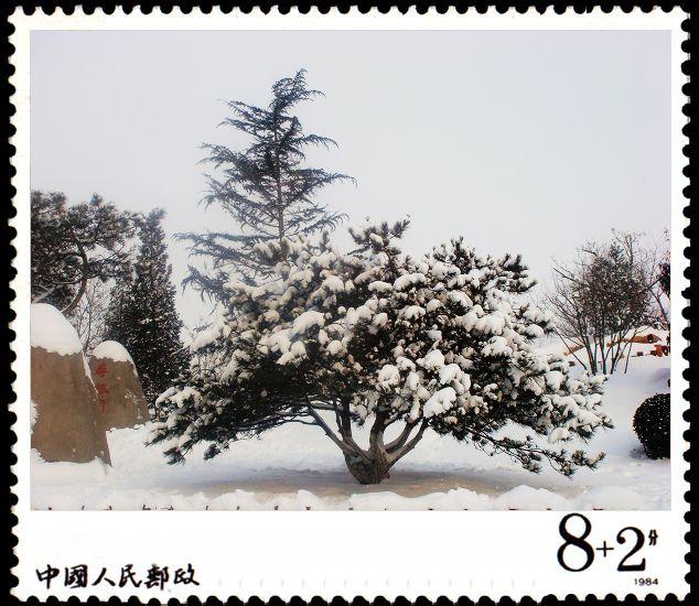 大雪压青松,青松挺且直